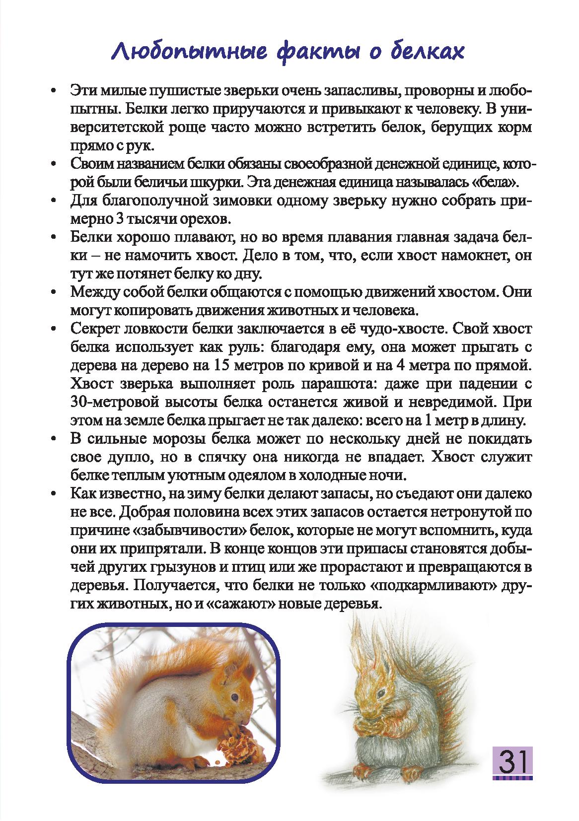 Детский журнал Енот - 2020.03 Страница 31
